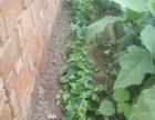 出租小菜园,农家乐采摘,提供自助烧烤场地