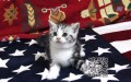银川实体猫舍专业繁殖多只美短出售 包纯种健康
