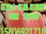 山东红富士苹果价格--,13U