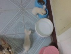自家猫咪生养的干净无疾病