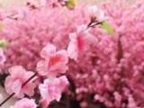 广东新年红色仿真桃花树塑料桃花树图片人造桃花树定做厂家批发