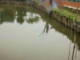 沙田民田牛栏角附近,2亩鱼塘出租,月租3000元