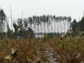 许南路郭桥 土地 10000平米可做休闲用地或种植
