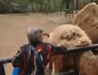 南昌肛肠医院:动物园薅骆驼毛 知情人称是为给人治痔疮