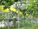 无公害蔬菜专用 粘虫胶带、黄板(图)