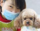杭州爱可宠物美容学校5月10号开班啦!