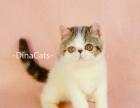 DinaCats加菲猫 异短待售
