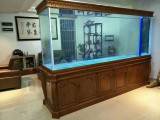 观赏鱼出售 各种鱼缸 海鲜池