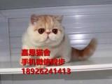 江门哪里有卖加菲猫多少钱一只纯种加菲猫好养吗已做好疫苗