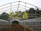 高平蔬菜大棚建一亩钢架蔬菜大棚骨架成本是多少