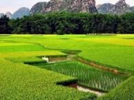 武汉周末去哪玩 短期周边游 周末游玩好去处-竹馨庄园