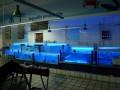 南通酒店鱼缸定制 南通海鲜池定制 南通观赏鱼缸 超市鱼缸定制