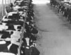 牧场鲜牛奶批发零售