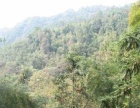 安徽省黄山1400亩林地转让
