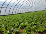 设施农业连栋温室大棚骨架的选择要点