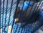 魔王松鼠,自养,亲人