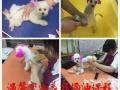 沈阳温馨宠物美容师培训学校