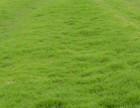 辽宁单位墓地工矿住宅小区别墅道路绿化用草坪苗木价位