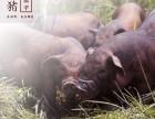 上杭槐猪- 土篮子- 福建**生态休闲农业基地体验园