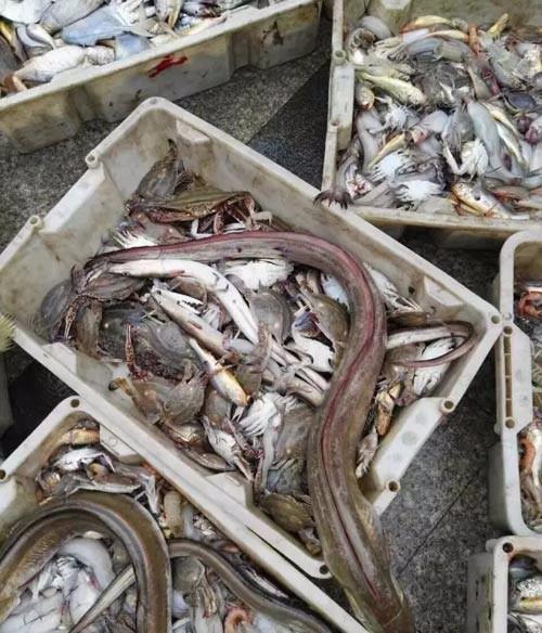 那一次朱家尖舟山包船捕鱼,在渔船上在大海中品尝美味海鲜!