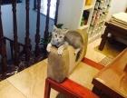 超低价自家养听话猫咪