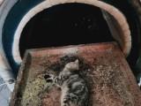 广州宠物火化宠物善终宠物殡葬服务