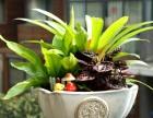 秀洲区鲜花花束开张花篮会议鲜花速递室内绿植