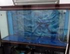 专业鱼缸清洗80元起 水族箱清洗 鱼缸维护