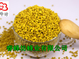 供应睿蜂坊花粉批发纯油菜花粉 天然蜂花粉 优级品蜂产品