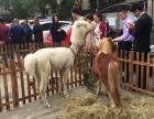 租驼羊特价驼羊租借实在上海神兽羊驼租赁浙江神兽