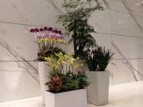 植物墻室內外綠墻永生苔蘚墻仿真綠墻庭院花園