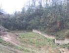 出售养殖场土地约17亩 内有山泉水