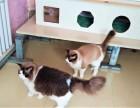 西罗园宠物寄养 长期提供猫猫狗狗寄养服务 房间有暖气可接送
