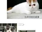 宠物猫种公对外借配