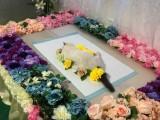 宠物墓地 宠物殡葬