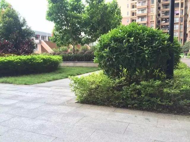 公明 锦田花园 8栋村委统建楼首付五成分期三年