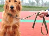 武汉汉阳专业宠物训练 犬只服从训练 行为纠正 专业宠物寄养