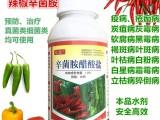 辣椒专用辛菌胺杀菌剂疮痂病炭疽病烂果黑斑叶斑病立枯朝天椒甜椒