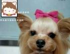 宠物美容师培训,青岛宠物美容,宠物美容师