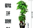 专业花束开业花篮庆典策划植物租摆绿化设计