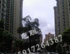 【分租合租】950元中山古镇中心社区办公室首层商铺