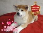 精品繁殖日系秋田幼犬 帅气温顺包健康包纯种可自提
