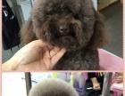 大连宠物美容师培训学校 宠物店加盟连锁