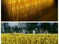 汉光展览武汉唯美灯光展道具现货出租互动设备租赁