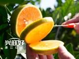 興旺農業不只能承包你的水果還能承包你的廚房
