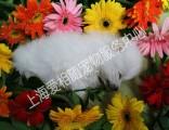 上海宠物火化黄浦区宠物殡葬延安东路宠物火葬上门接送