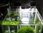 水草缸,超白玻璃,鱼缸