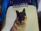 金色宠物店食品用品批发零售