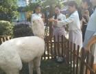 上海静安区矮脚马出租-迷你马租赁-小矮马租赁-生日派对庆典