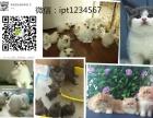 宠物猫批发零售,全国宠物猫一手货源,宠物猫资源